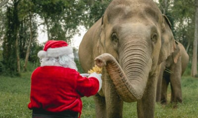 Thailand non-profit offers Zoom calls with Santa and his elephant friends | The Thaiger