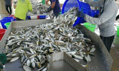 Laos temporarily bans seafood from Thailand after Covid-19 outbreak | The Thaiger