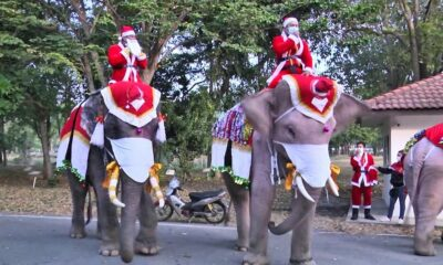 """Ayutthaya elephants """"Santas"""" add a face mask to their Christmas costume 