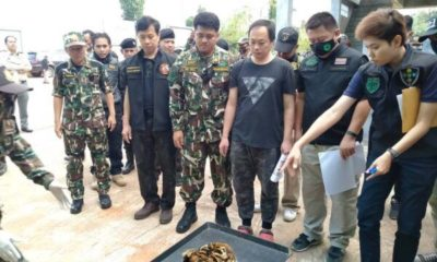 Tigers and tiger body parts seized from Thai zoo investigated for alleged wildlife smuggling | The Thaiger