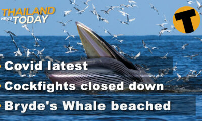 Thailand News Today | Covid latest, Cockfights closed down, Bryde's Whale beached | January 11 | The Thaiger
