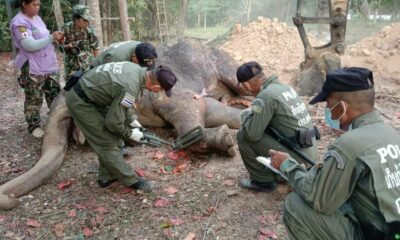 Elephant dies after month of treatment for gunshot wounds, 40 bullets found in the body | Thaiger