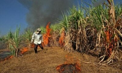 Stop the burn – Thai Governors told to stop farmers burning off agricultural waste | The Thaiger