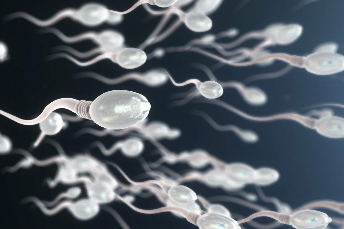 Study claims Covid-19 can negatively impact a man's sperm, experts are skeptical | The Thaiger