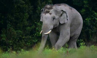 A wild elephant kills 80 year old camper in Khao Yai | The Thaiger