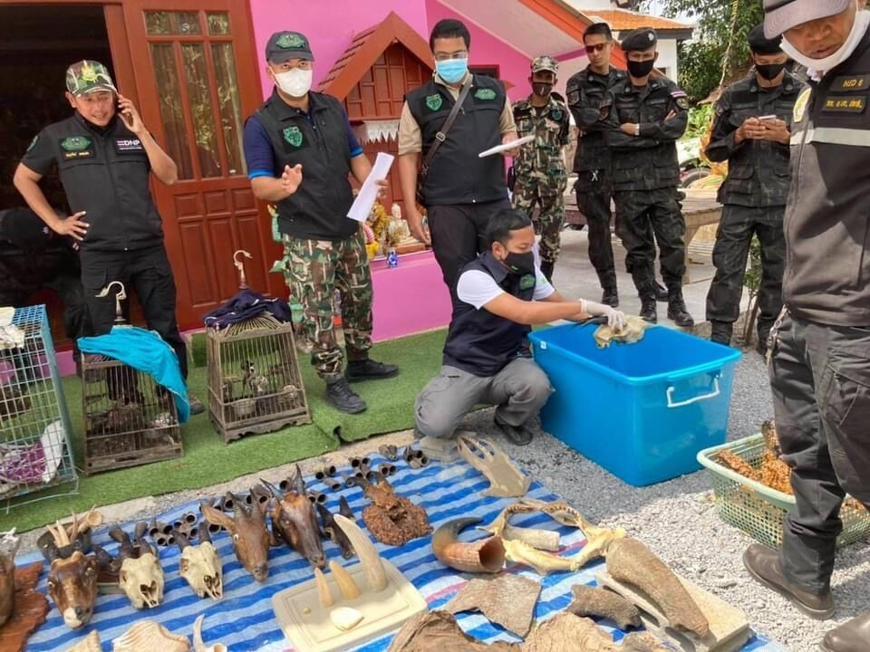 Southern Thailand man arrested for allegedly selling protected animal carcasses online | News by The Thaiger
