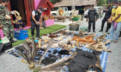Southern Thailand man arrested for allegedly selling protected animal carcasses online | Thaiger