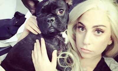 Lady Gaga offers US $500,000 reward for stolen bulldogs | The Thaiger