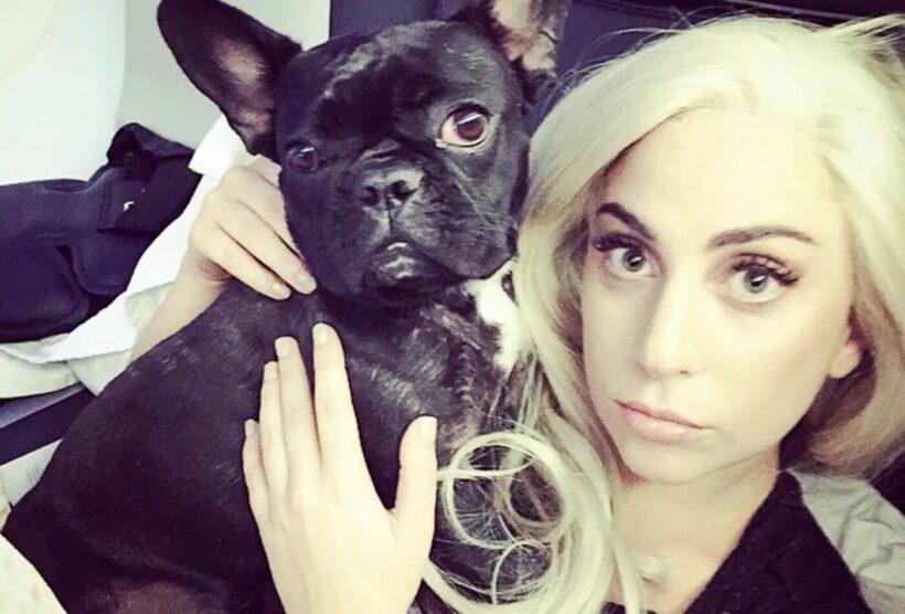 Lady Gaga offers US $500,000 reward for stolen bulldogs   Thaiger