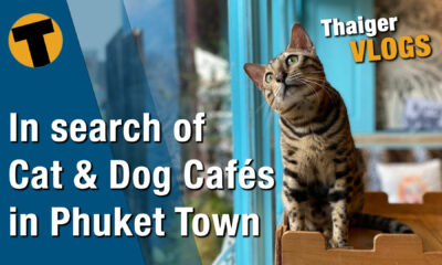 In search of Cat & Dog Cafés in Phuket Town | VIDEO | The Thaiger