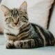 Sick pet cats and dogs to be tested for Covid-19 in Seoul, South Korea | The Thaiger