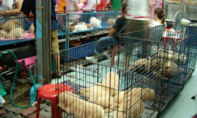 Thailand acknowledges wildlife markets could be dangerous to humans | Thaiger