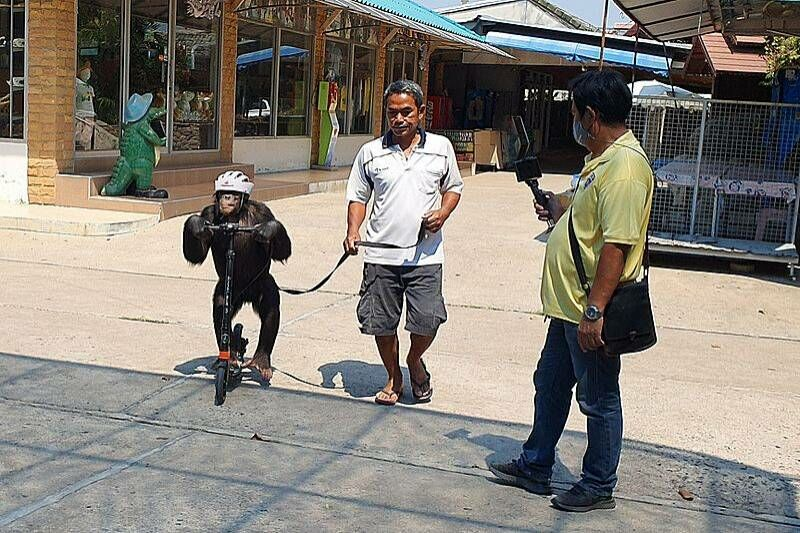 Park rangers inspect the controversial Samut Prakan Crocodile Farm and Zoo after criticism | The Thaiger