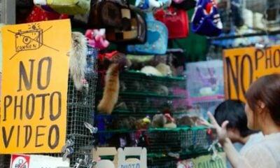 Health officials deny WHO investigation into Bangkok's Chatuchak market as potential origin of Covid | Thaiger
