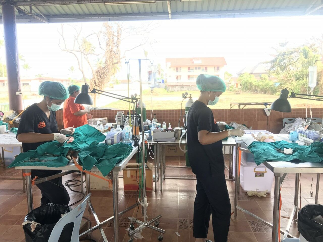 Soi Dog sets up mobile clinic on Koh Samui to neuter and vaccinate stray animals | The Thaiger