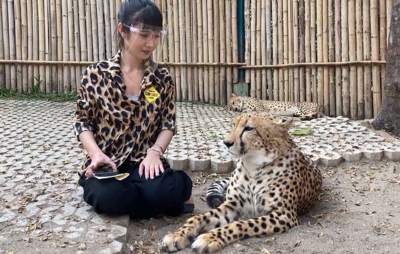 PETA calls on Thai officials to ban photos with exotic animals due to Covid-19 | The Thaiger