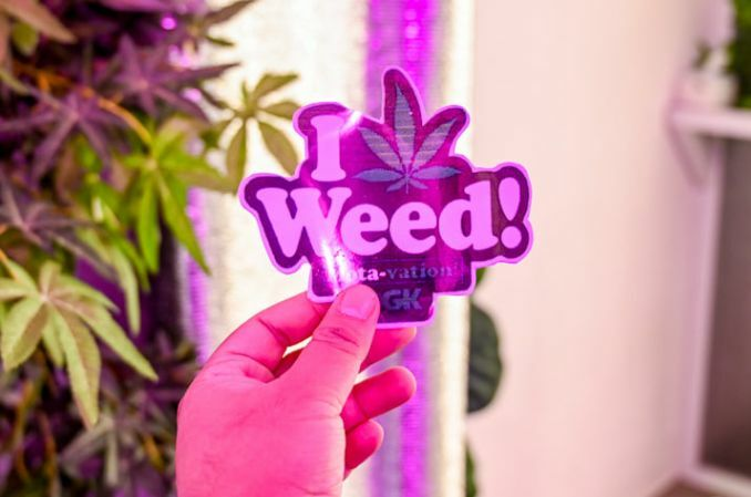 Thailand becomes more cannabis-friendly after leaves removed from narcotics list | The Thaiger