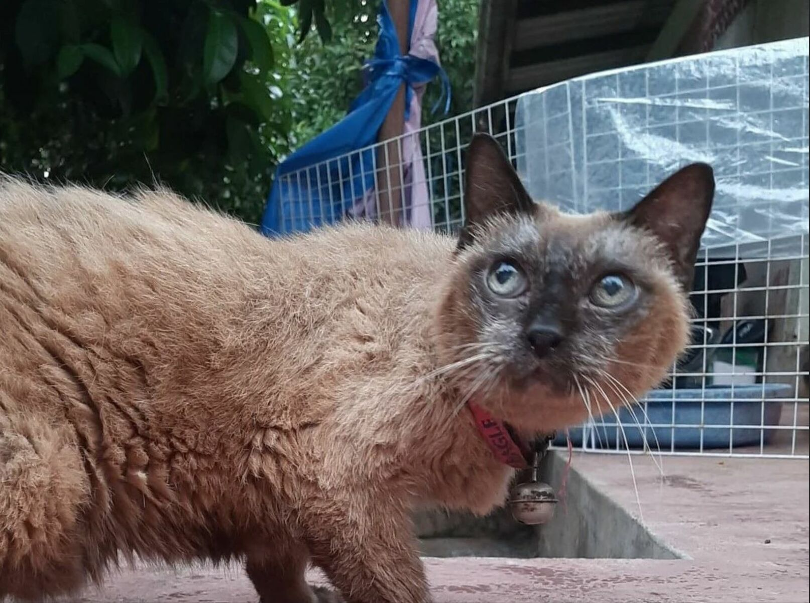Thailand News Today | More vaccine options for Thailand, the world's oldest cat? | March 26 | Thaiger