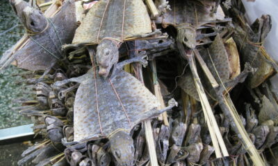 Isaan families earn tens of thousands of baht selling dried tokay geckos | Thaiger