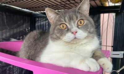 Cats seized in suspected drug network raid in Rayong to be auctioned off | Thaiger