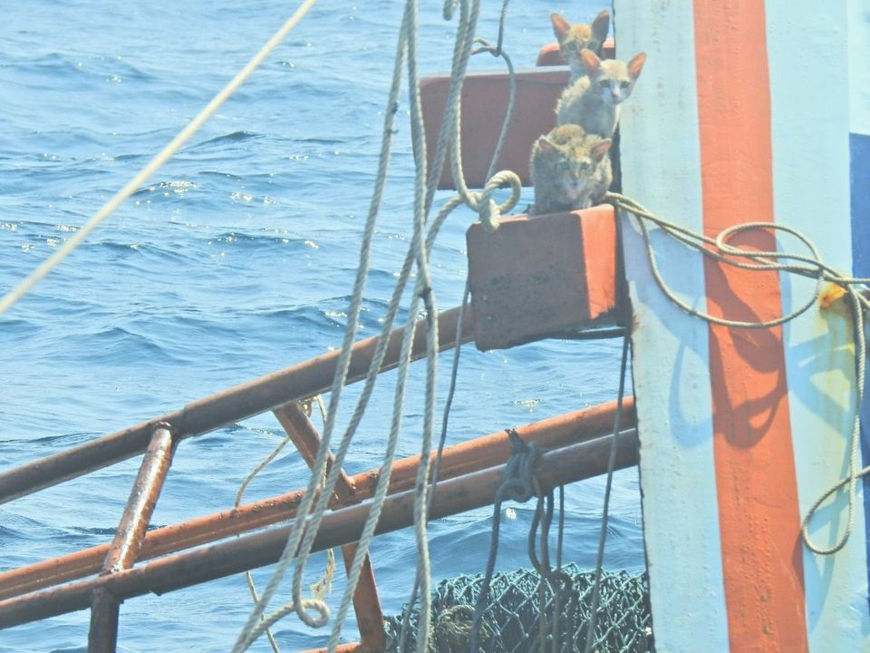 Thai navy receives PETA award after rescuing cats from sinking ship | The Thaiger