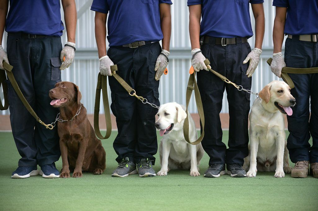 Thailand's Chulalongkorn University trains dogs to sniff out Covid-19 | News by Thaiger