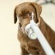 Thailand's Chulalongkorn University trains dogs to sniff out Covid-19 | Thaiger