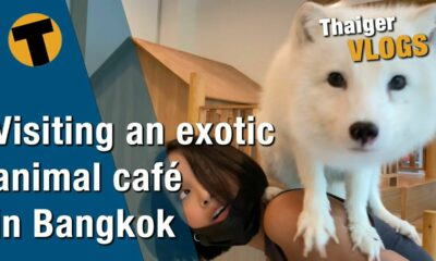 An exotic animal café in Bangkok – Foxes, racoons, kangaroos and more! | VIDEO | Thaiger