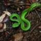 """""""Mommy, there's a snake!"""" – Expat in Phuket shares her story 