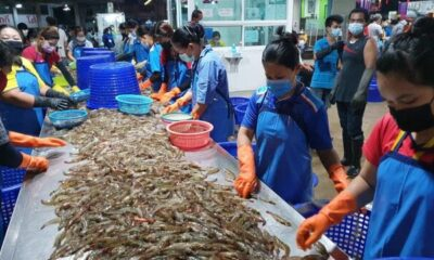 Samut Sakhon shrimp market, recent Covid-19 wave's epicentre, is back open and bustling | The Thaiger