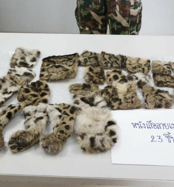 WildAid launches ad campaign in Thailand to raise awareness about illegal wildlife trade | The Thaiger