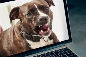 Owner of deadly pit bull threatens online commenters | Thaiger