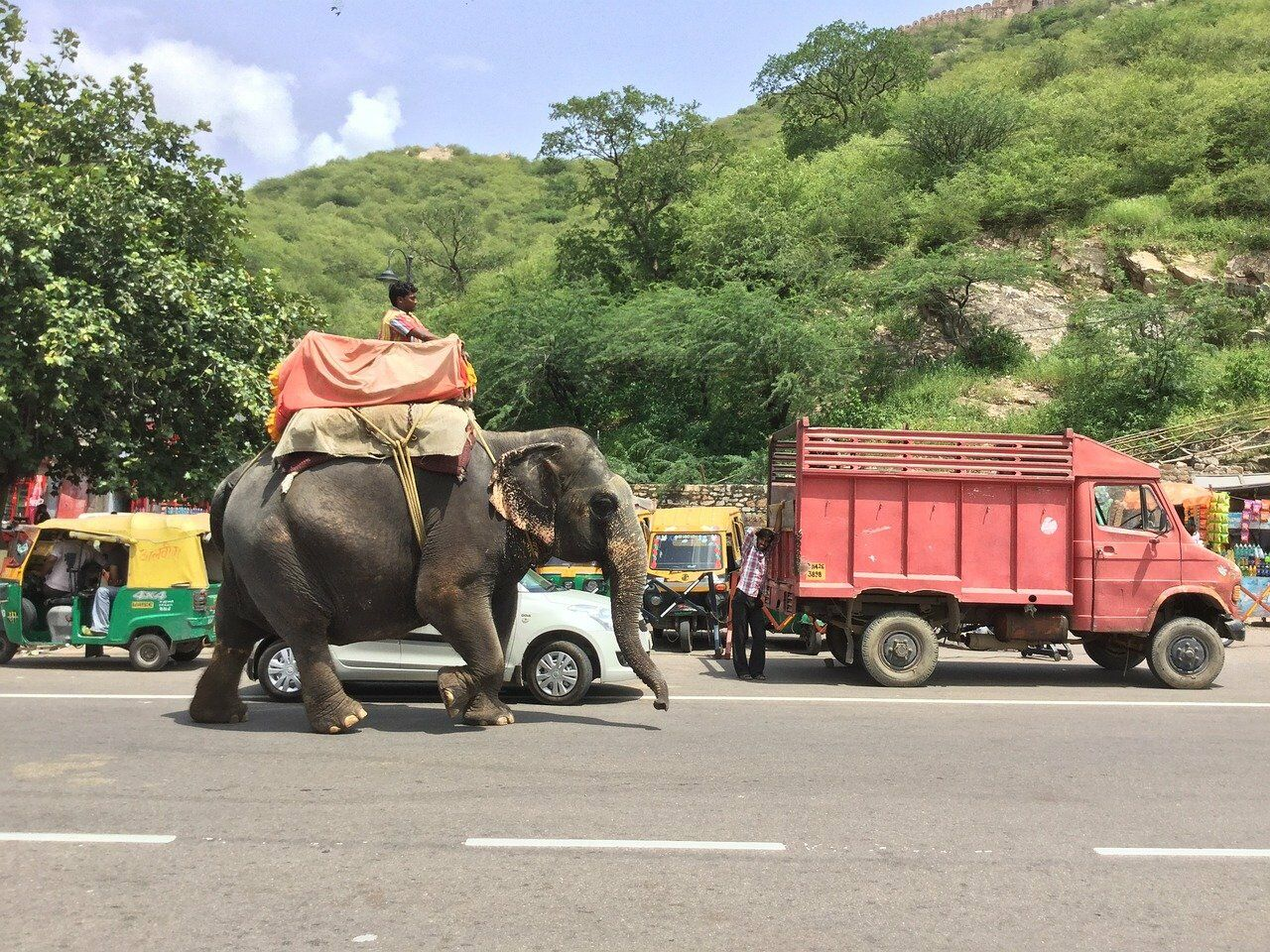 Elephants walking from Pattaya to Surin get a lift | Thaiger