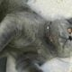 Thai chef pleads for justice after child kills her cat in New York park | Thaiger