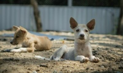 7 Thai dogs find a new home in California | Thaiger