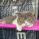 6 cats up for auction after owners in drug raid, proceeds go to Narcotics Control Fund | Thaiger
