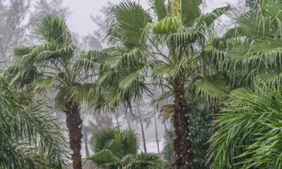 Thailand's monsoon season expected to be heaviest in 30 years | Thaiger