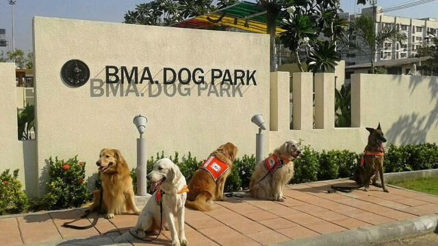 Top 7 Places to Take Your Pet Dog in Bangkok | News by Thaiger