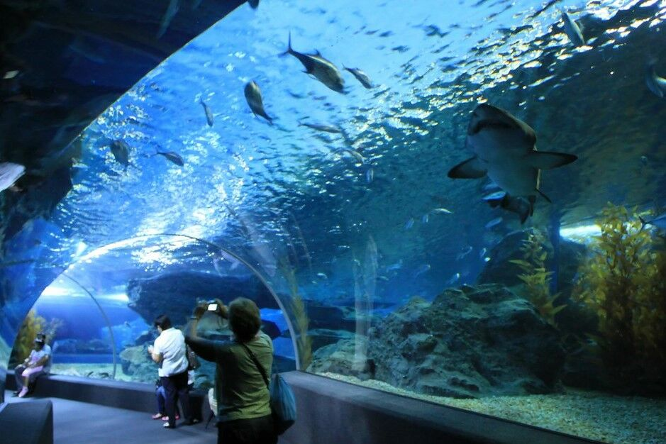 Top 10 Family-Friendly Things to do in Thailand   News by Thaiger