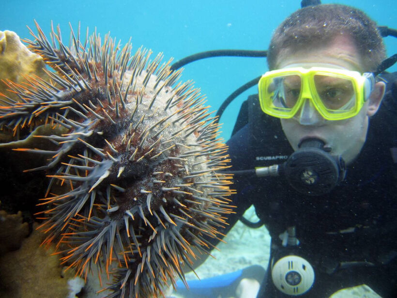 Top 5 Diving Schools in Koh Samui | News by Thaiger