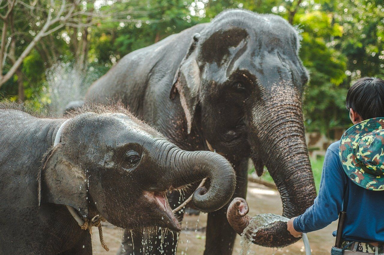 18 Must Try Activities in Thailand   News by Thaiger